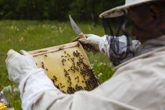 Beekeeper Stock Images