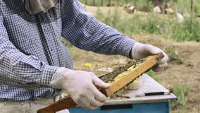 Beekeeper working with beehives. View of bees on honeycomb stock footage