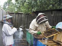 Beekeeper working. The beekeeper smokes the smoke. stock photo