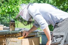 Beekeeper at work by the wooden bee hives. Young farmer in his farm. stock photo