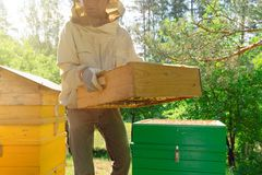 Beekeeper is working with bees and beehives on the apiary. In a natural light stock images