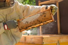 Beekeeper is working with bees and beehives on the apiary. In a natural light stock photography