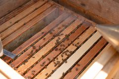 Beekeeper is working with bees and beehives on the apiary. In a natural light stock photos