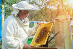 Beekeeper is working with bees and beehives on the apiary. Apiculture. Beekeeper is working with bees and beehives on the apiary. Beekeeper on apiary stock photos