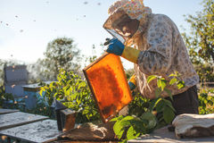 Beekeeper is working with bees and beehives on the apiary. Beekeeper on apiary. Royalty Free Stock Image