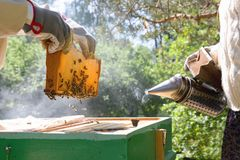 Beekeeper is working with bees and beehives on the apiary. In a natural light royalty free stock photos