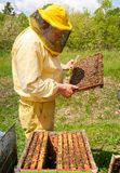 Beekeeper is working with bees and beehives on the apiary. Beekeeping concept royalty free stock image
