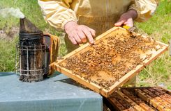 Beekeeper is working with bees and beehives on the apiary. Beekeeping concept royalty free stock images