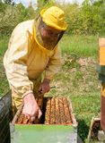 Beekeeper is working with bees and beehives on the apiary. Beekeeping concept royalty free stock photos