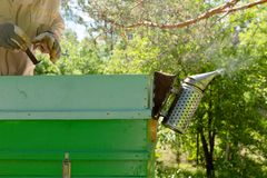Beekeeper is working with bees and beehives on the apiary. In a natural light royalty free stock image