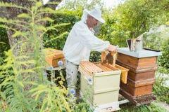 Beekeeper working with bees in beehouse. Standing in garden Stock Photos