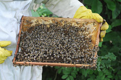 Beekeeper working Royalty Free Stock Images