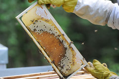Beekeeper working Stock Images