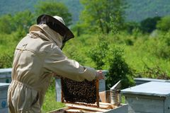 Beekeeper working collect honey. Apiary. Beekeeping concept. Beekeeper working collect honey. Apiary. Beekeeping concept stock image
