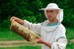 Beekeeper working collect honey. Beekeeper holding a honeycomb full of bees. Beekeeping concept. royalty free stock photo