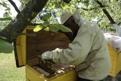 Beekeeper working collect honey. Beekeeping concept working royalty free stock image