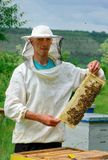 Beekeeper working collect honey. Beekeeper holding a honeycomb full of bees. Beekeeping concept. royalty free stock photos