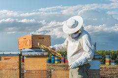 Beekeeper working Royalty Free Stock Photo