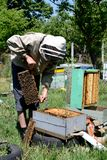 Beekeeper working Royalty Free Stock Photography