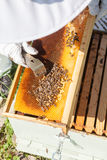 Beekeeper working in his apiary Royalty Free Stock Image