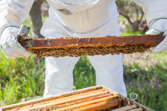Beekeeper working in his apiary Stock Photo