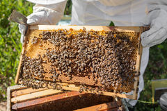 Beekeeper working in his apiary Royalty Free Stock Photos