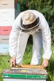 Beekeeper Working In His Apiary Stock Photography