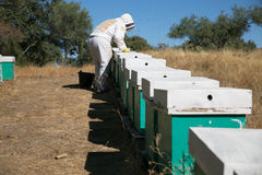 Beekeeper working on hives royalty free stock images