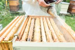 Beekeeper working with smoke on his bees. Outdoors Stock Image