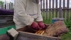 The beekeeper works in the apiary with bee families. Village apiary.