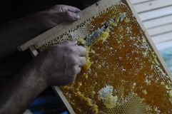 A beekeeper works with the bees and the hives in the apiary. a man in a protective suit at the apiary. Employee pulls the frame fr. Om the hive. honeycomb with stock image