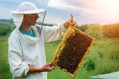 The beekeeper works with bees near the hives. Apiculture. Stock Image