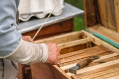 The beekeeper works with a honey bee royalty free stock photo