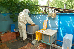 Beekeeper works Stock Photography
