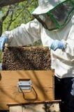 beekeeperarbete Arkivbilder