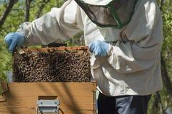 beekeeperarbete Royaltyfri Bild