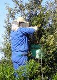 beekeeperarbete Fotografering för Bildbyråer