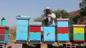 Beekeeperen använder borstet för att bli av med bin arkivfilmer