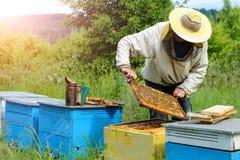 _ Beekeeperen arbetar med bin nära bikuporna Biodling Arkivbilder