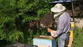 Beekeeperen drar försiktigt ut honungskakan från bikupan och ser den stock video