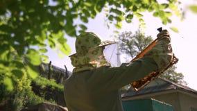 Beekeeperen drar försiktigt ut honungskakan från bikupan och ser den Håller ögonen på honungcellen för närvaron av lager videofilmer