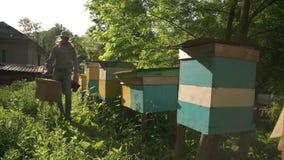Beekeeperen kommer till bikuporna att samla honung En solig dag i en grön trädgård arkivfilmer