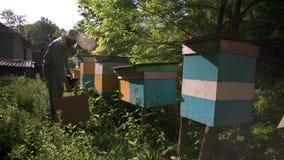 Beekeeperen kommer till bikuporna att samla honung En solig dag i en grön trädgård lager videofilmer