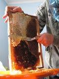 Beekeeperen med honungskakaramen Fotografering för Bildbyråer