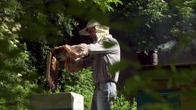 Beekeeperen skakar honungcellen för att göra klar den från bina Bina flyger stock video