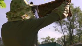 Beekeeperen skakar honungcellen för att göra klar den från bina Bina flyger lager videofilmer
