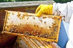beekeeperhonungskaka Royaltyfria Foton