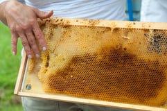 beekeeperhonungskakauppvisning Arkivfoton