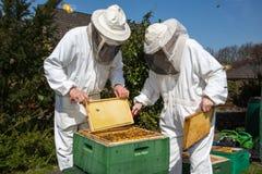 2 beekeepers поддерживая крапивницу пчелы Стоковое Изображение