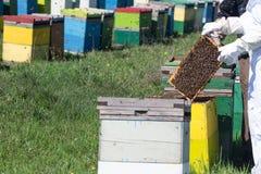 Beekeepers проверяя ульи Стоковое фото RF